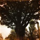 Haunting Autumn - 1 (3)