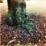 Haunting Autumn - 1 (9)